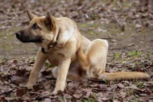 антипаразитарные ошейники для собак