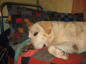 лечение экземы у собак