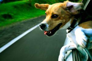 набор для длительной поездки собаки в автомобиле