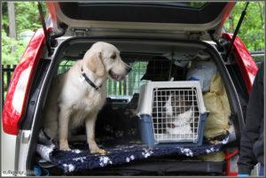 клетки для собак в автомобилях