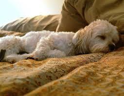 питание при энтерите у собак