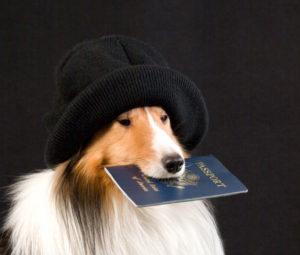 прививочный паспорт собаки