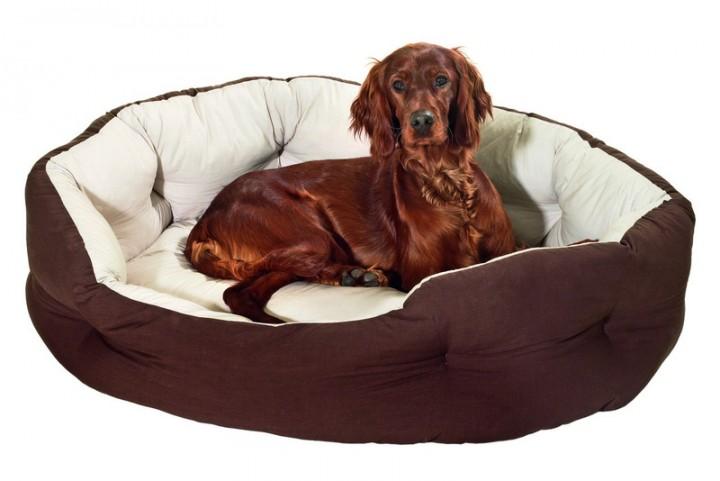 Лежанка для собаки: популярные модели и способы приобретения