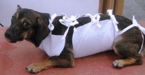 послеоперационная попона для собак