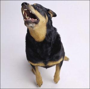лечение дерматита у собаки