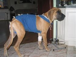 лечение медикаментами мастита у собаки