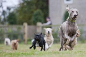 загородный отель для собак