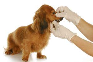 воспаление в органах дыхания у собак