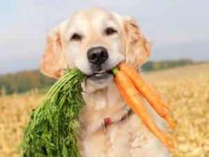 собачие витамины