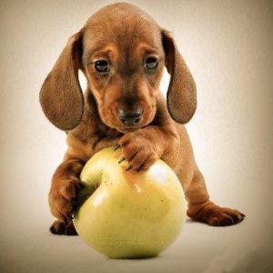питание собаки при запоре