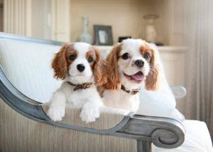 маленькие породы собак для квартиры