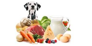что учитывать при кормлении собак