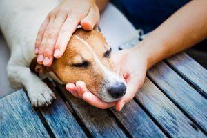 лечения запора у собак