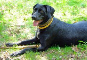 лечебные ошейники от блох и клещей для собаки