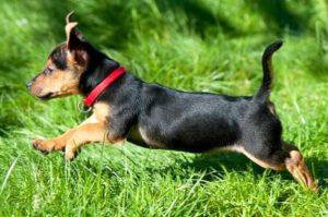 лечебные ошейники для маленьких собак