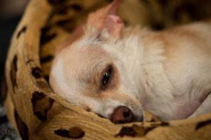причины мастита у собаки
