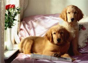 передержка собаки в домашних условиях