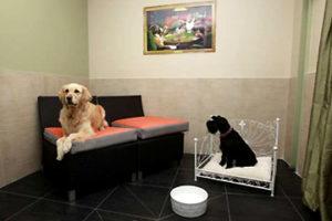 правила выбора передержки собак
