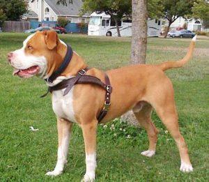 универсальная шлейка для собак
