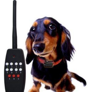 электронные ошейники для маленьких собак