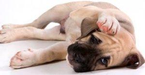 осложнения после ушного клеща