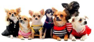 маленькие породы собак в квартире