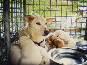 питание кормящих собак
