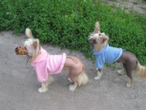 намордник для маленьких собак