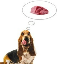 мясо для собак как выбрать