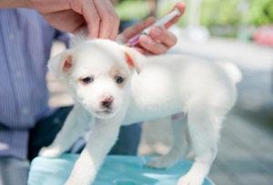 вакцинация щенков