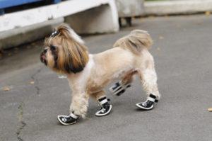 кроссовки для собак