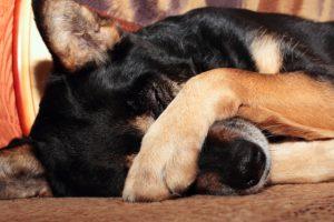 болезни собак на даче