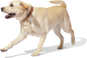 дерматит у собак характеристики