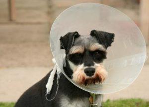 дерматит у собак причины