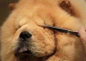 виды инструментов для стрижки собаки