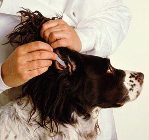 медикаментозное лечение отита у собак