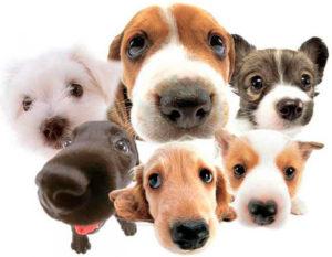 стрижка собаки в домашних условиях