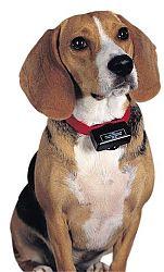 ошейники «антилай» для маленьких собак