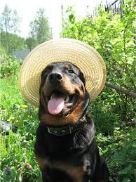 техника безопасности собаки на даче