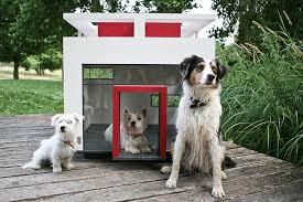 туалет для маленьких собак на даче