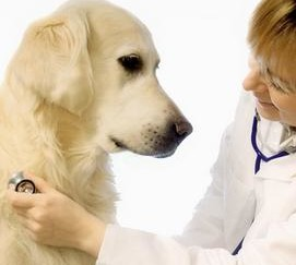 температура заболевании дыхательных путей собаки