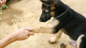 команда дай для собаки
