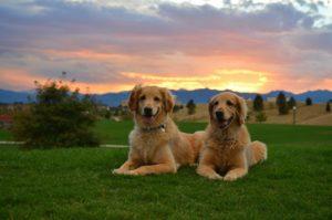 витамины на страже красоты собаки
