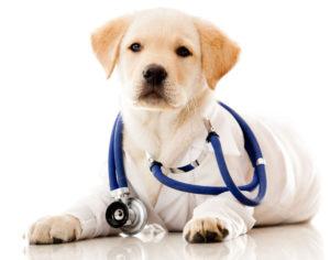операция по кастрации собак