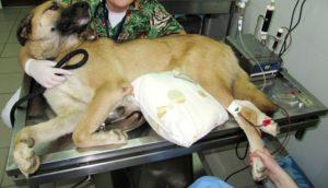 очистка крови для собак