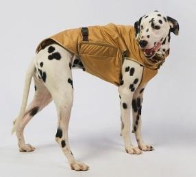 комплект одет на собаку
