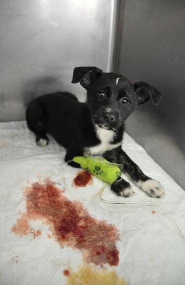 реализуем изделия энтероколит у собак симптомы и лечение того, что раньше