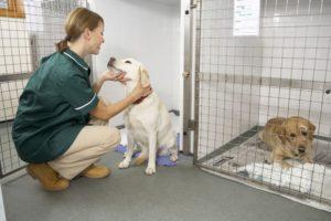 передержка собаки в ветклинике