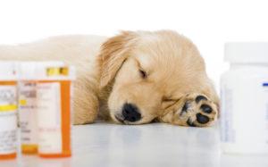 таблетки от ушного клеща у собак