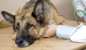почему у собаки запор?